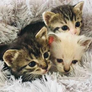 保護猫3匹やってきた!