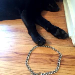 見た目が残念、犬のTick collar!