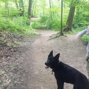 ザビ散歩:ウォーキングで友達に驚かれた事。