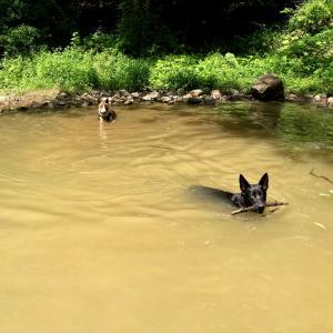 Respite Careって何?愛犬ザビ、再度Doggy Day Careへ。