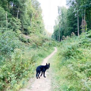 犬フォスター生活:それぞれone on oneの時間