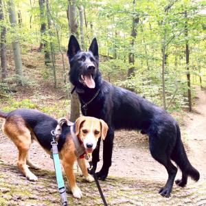 フォスター犬生活:君達、庭を破壊するのやめてください。