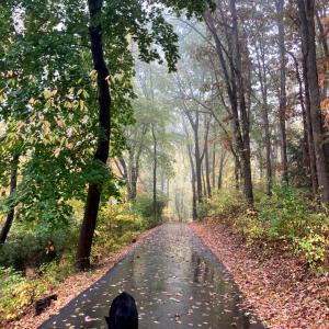 ザビ散歩:本降りの雨のトレイル