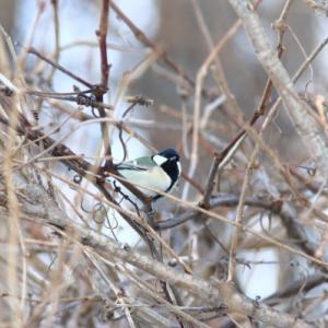 鳥見  2020/01/25