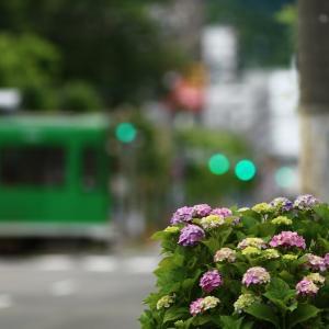 紫陽花と市電  2021/07/11