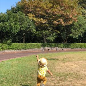 公園と秋祭り