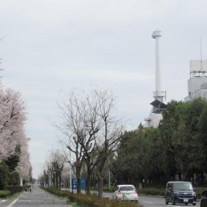 米軍通信基地を横断する東西連絡道路きょう開通(埼玉・所沢)