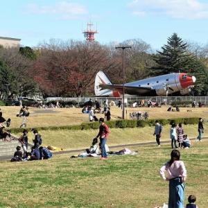 所沢航空記念公園 今年の紅葉の見納め(埼玉)