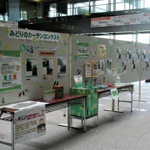 市役所で「みどりのカーテンコンテスト」開催(埼玉・所沢)