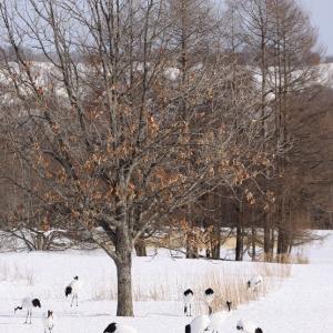 雪がないって言ってたら 12月22日
