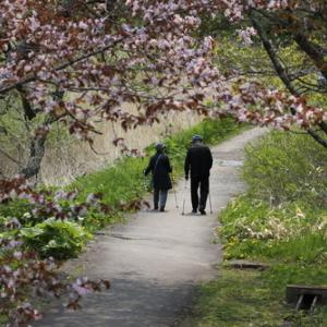 令和桜もあとすこし 5月19日