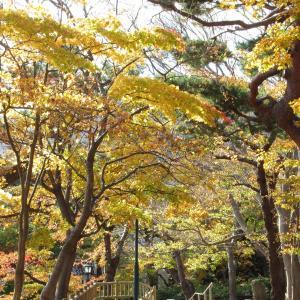 函館公園の紅葉もどうなった!