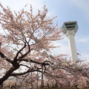 函館周辺のお花見について(2020年版)
