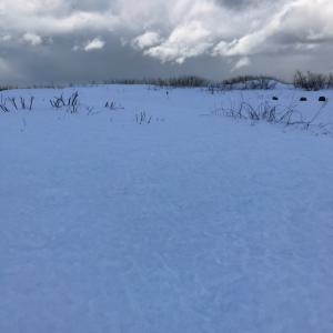 雪上ラン&ウォーク
