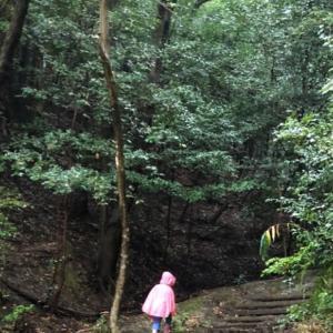 6/27 [講座]雨でも森へ行こう 梅雨の森遊び