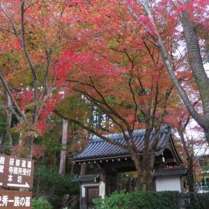 2020秋 滋賀県 坂本城址から西教寺の紅葉とライトアップ
