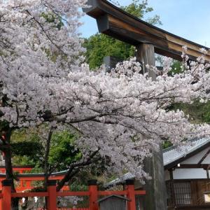 建勲神社 水火天満宮 本法寺の桜