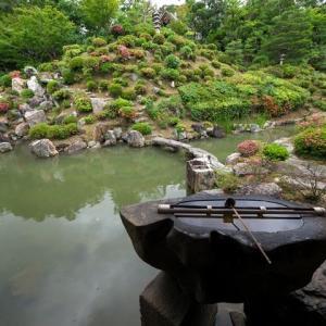 智積院の皐月と紫陽花 勝林寺の花手水 東福寺の皐月