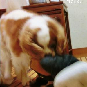 江戸川区の愛犬をしまったよ