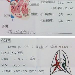獣医循環器認定医@3ヶ月ぶり8回め(3回連続で雨…