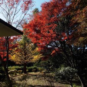 初冬の鎌倉;超のろのろ歩きの成福寺・台峯緑地・源氏山公園の紅葉見物