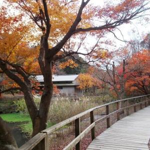 初冬の鎌倉;鎌倉中央公園の紅葉
