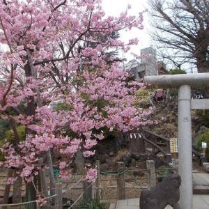東京の知らない街をブラリ旅;信濃町駅から原宿駅へ(2);仙寿院と鳩森八幡宮の富士塚