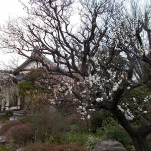 東京の知らない街をブラリ旅;信濃町駅から原宿駅へ(3);榎稲荷大明神と瑞圓寺