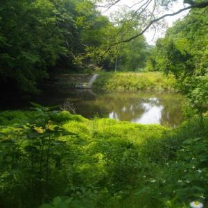 初夏の鎌倉;台峯山頂の藪漕ぎと久々に矢戸池探訪
