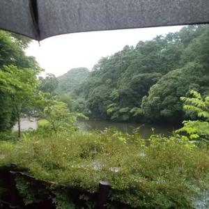 梅雨時の鎌倉;雨の鎌倉中央公園もまた楽しい