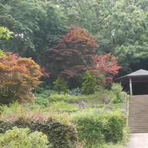 鎌倉中央公園・大船駅周遊;蒸し暑い晴れの日(雨の日との比較)