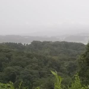 雨の鎌倉;和田塚・成就院・月影地蔵・夫婦池公園縦走(中編)