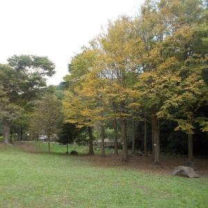 秋の気配を満喫する鎌倉大船駅往復定番コース(前編)