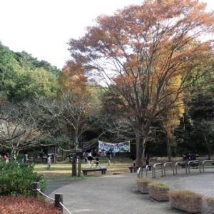 秋深まる;鎌倉中央公園を軽く一回り