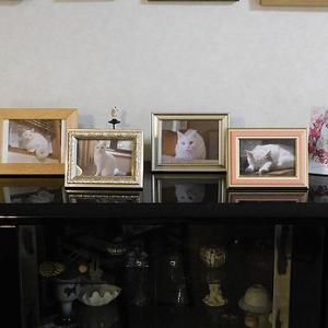 マルメロちゃんの写真展