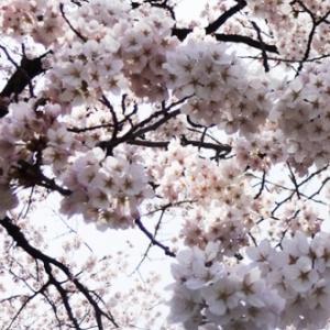 今月のご予約空き状況 (4/9更新)