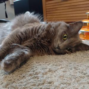 土曜日の猫