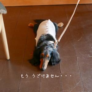 free stitch チャリティー撮影会