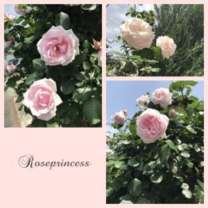 ● お花に癒されています!
