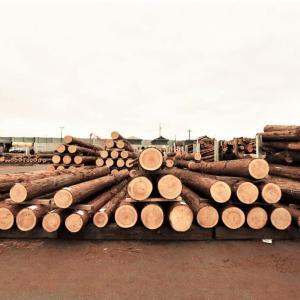 風の森の土壁4 建築士が市場で丸太を買う