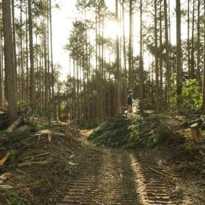 風の森の土壁5 材木の伐採と天然乾燥
