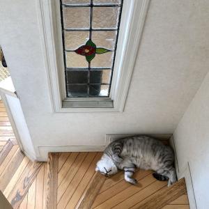 猫は階段で涼む。