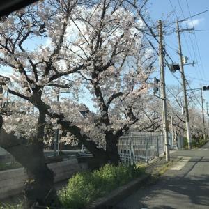 延羽の湯 オフィシャルブログ  Vol.5187