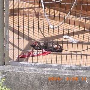 日本平動物園の動物達
