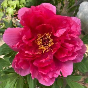 花の美しさから降りてきた言葉