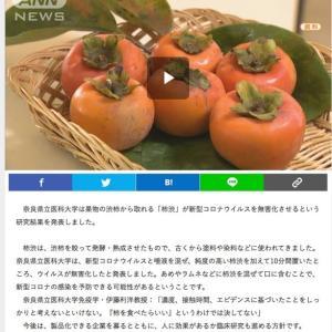 柿渋とコロナ