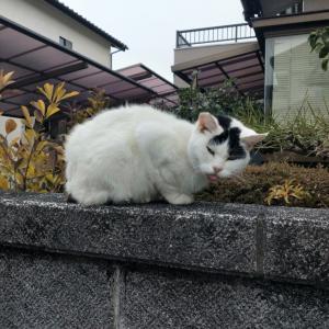 近所のネコちゃんと乃が美の食パン