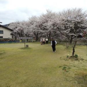 雑感・・・満開の桜の下で