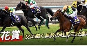 第81回菊花賞・検討