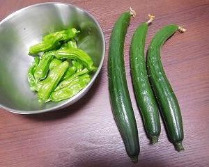 今日の収穫 キュウリ・シシトウ